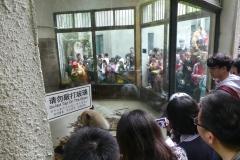la cage à pandas