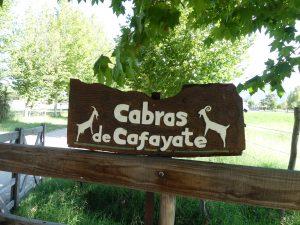 à la chèvrerie de Cafayate