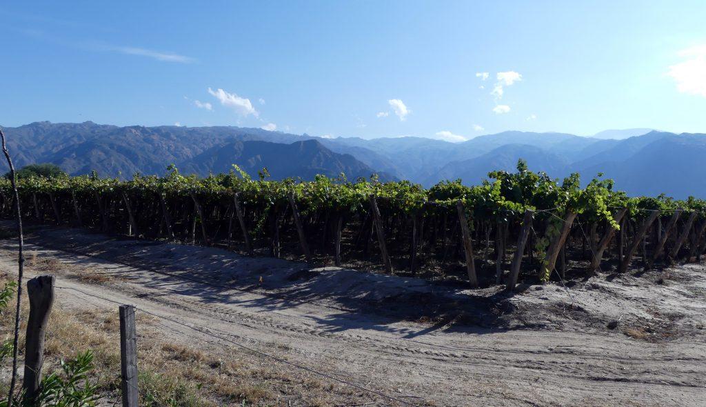 vignoble de Cafayate devant les Andes