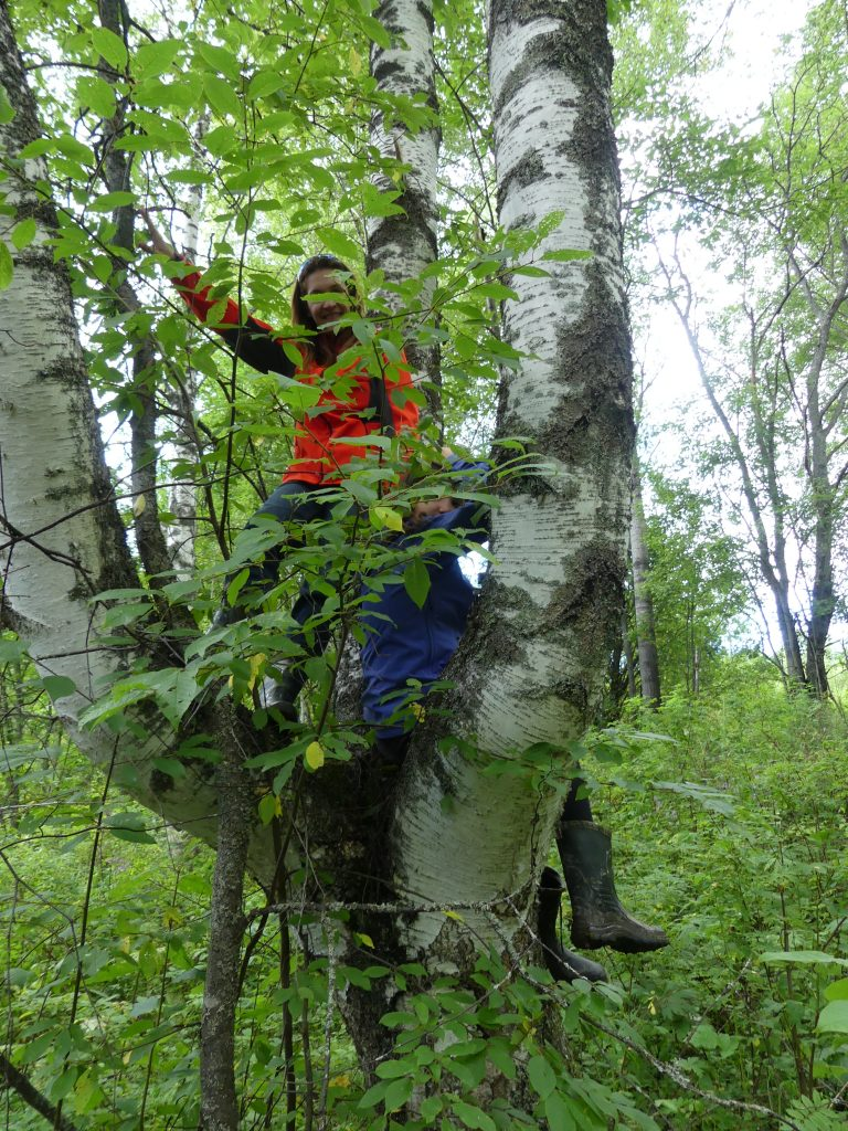 Chrystel dans l'arbre : on voit mieux les troncs à enlever d'en haut