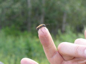 des insectes, plein d'insectes !