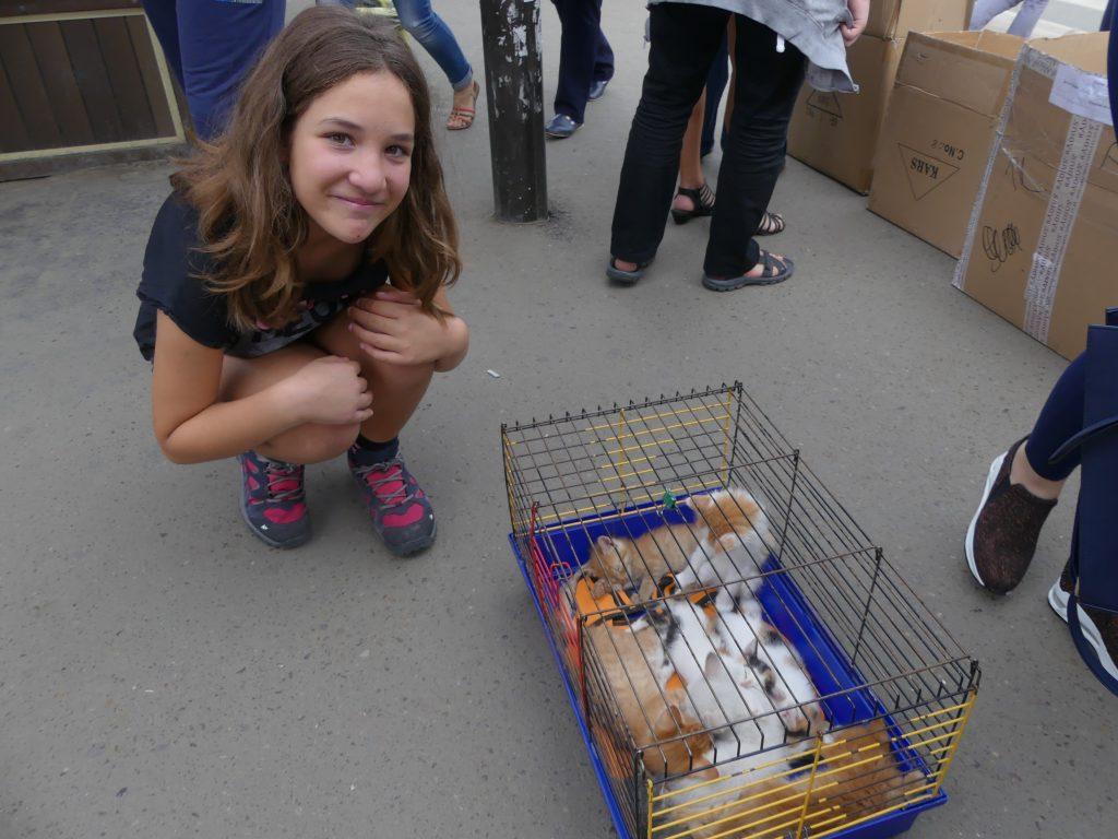 juste avant la Mongolie - Irkutsk : le marché aux chiens et chats