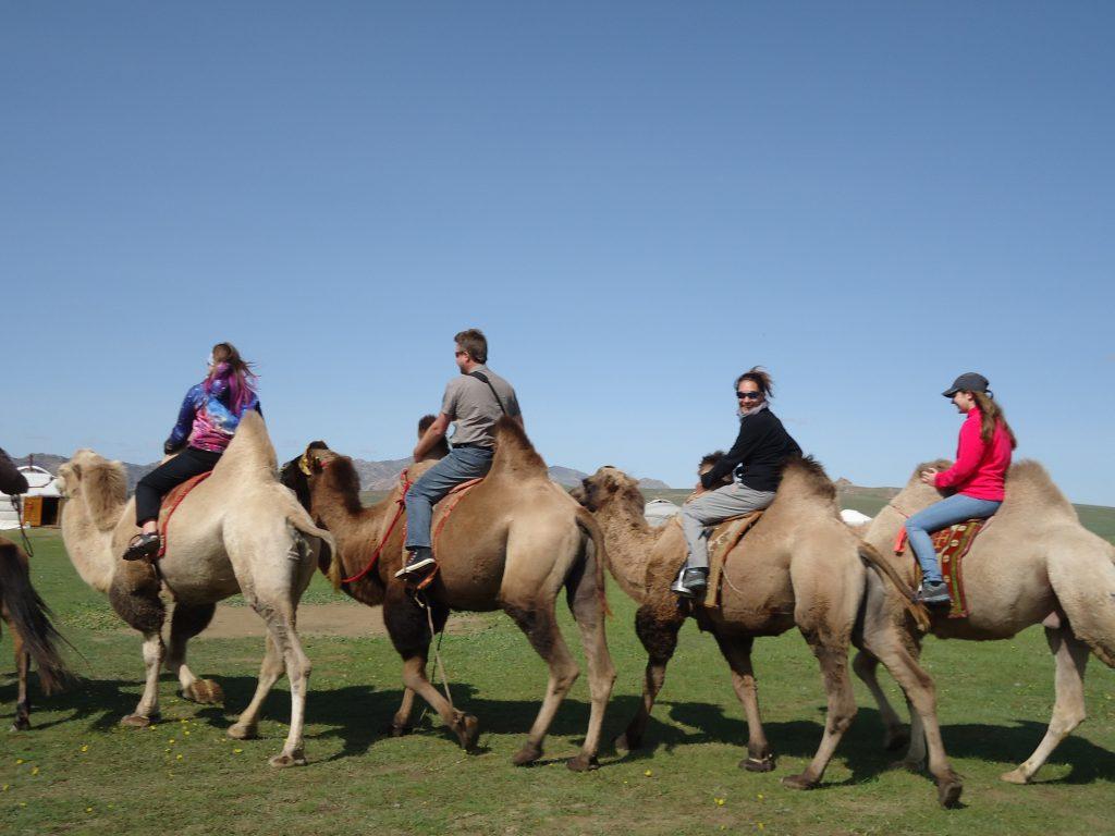 Chameaux en Mongolie