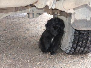 Petit chien sous le véhicule (verso)