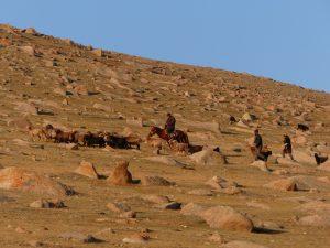 les nomades rapportent le troupeau
