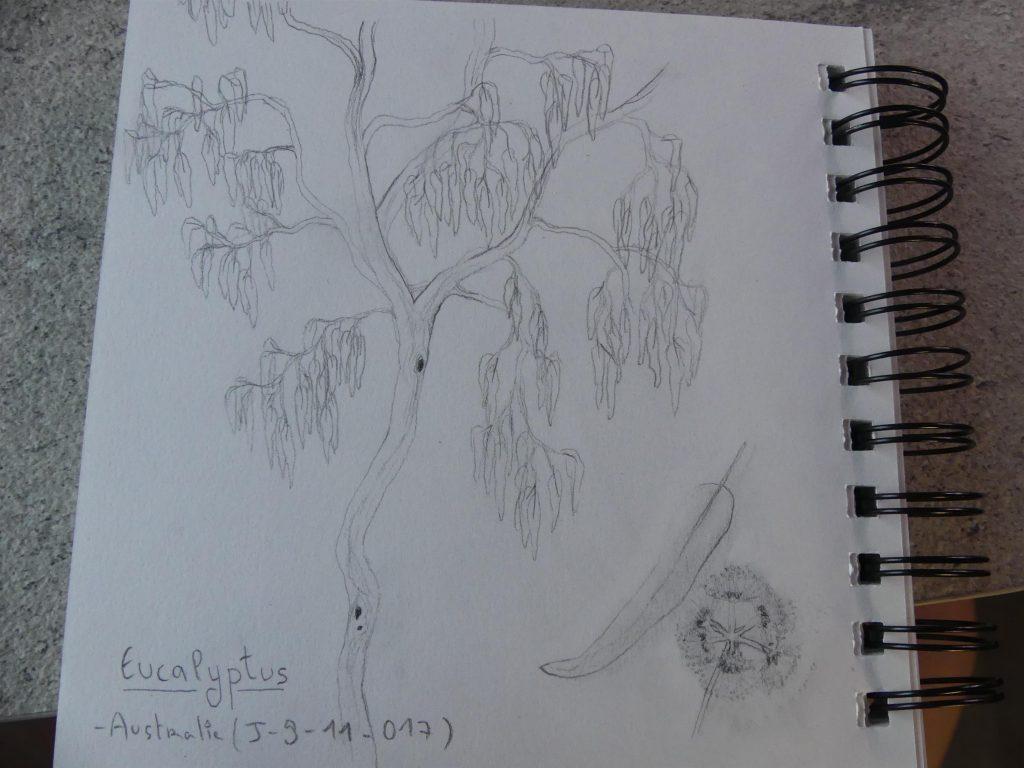 les filles apprennent à dessiner les eucalyptus