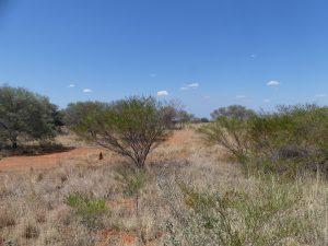 le bush désertique de l'outback