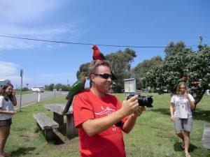 oiseaux magnifiques en Australie (1)