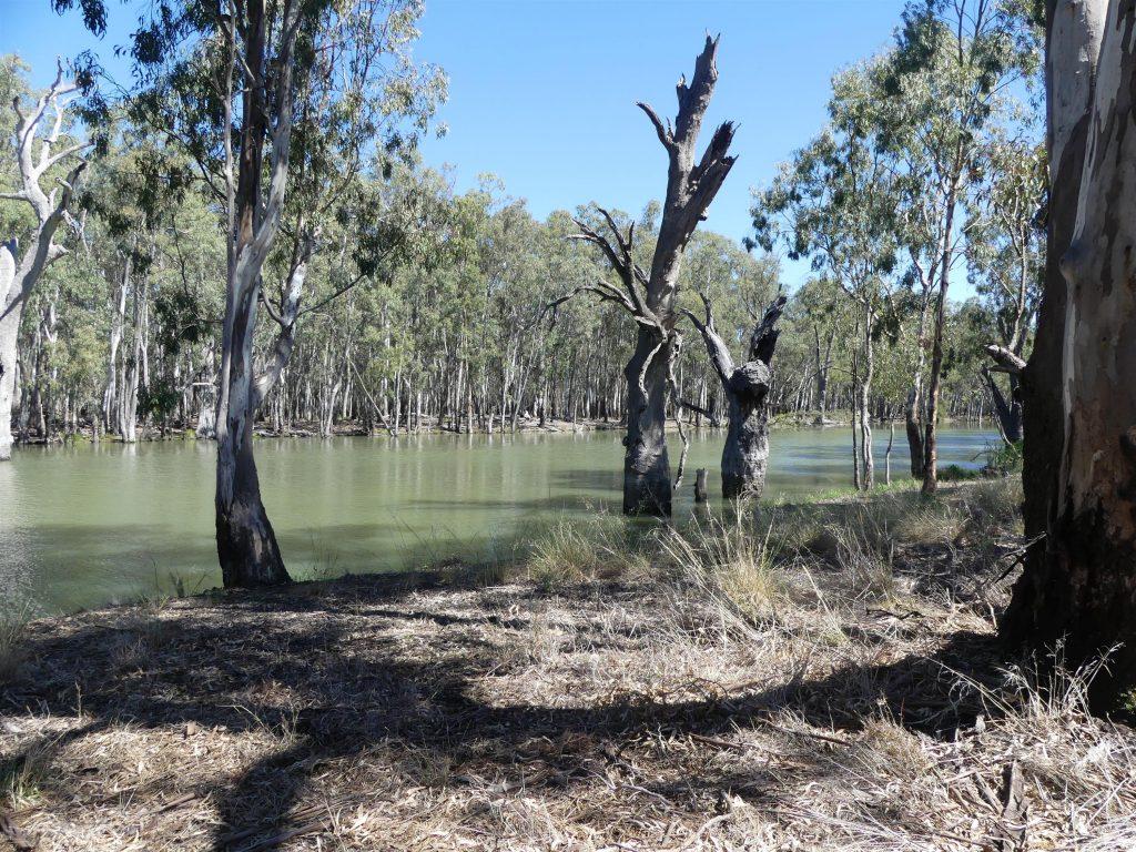 rivière d'irrigation en NSW, Australie