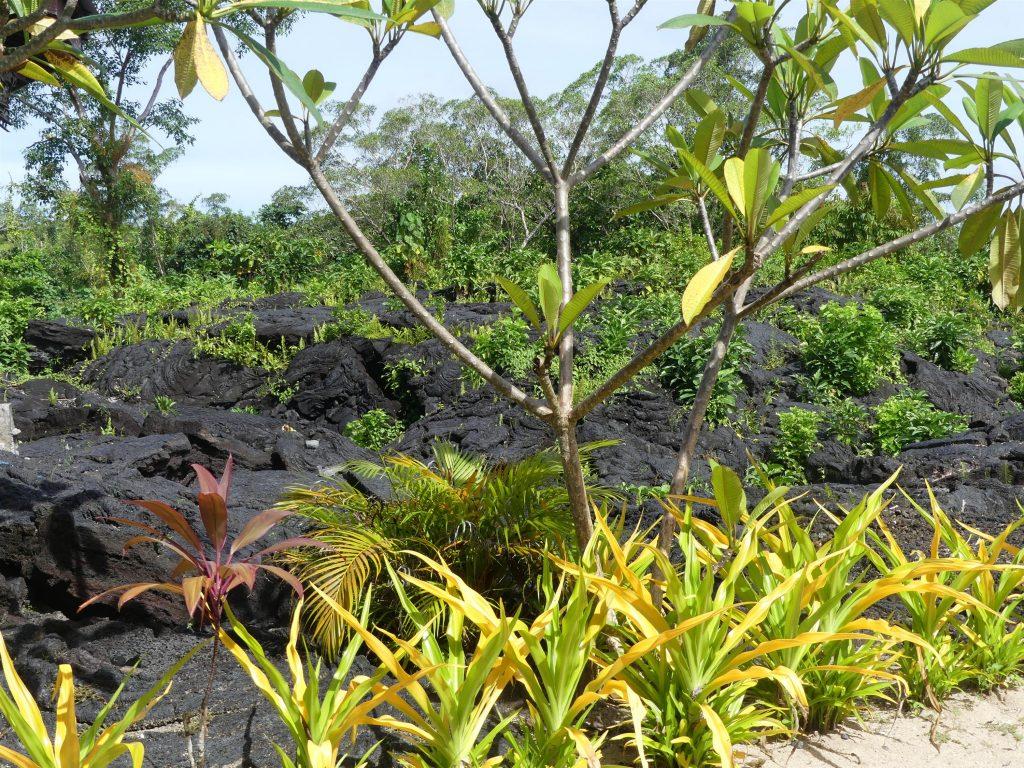 Notre bungalow est littéralement sur une ancienne coulée de lave : le cours de géologie !