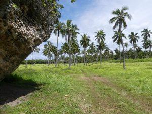 le rocher au milieu de la forêt tropicale