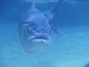 Aquarium de Cleveland, OH