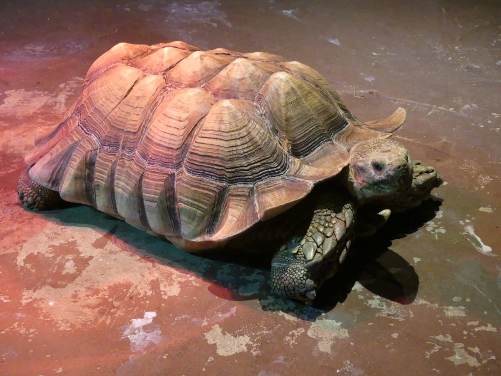 Il y a aussi des tortues