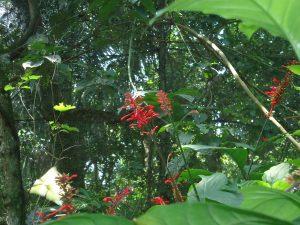 fleurs de Bolivie