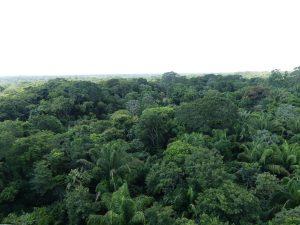 la jungle tropicale est tout autour