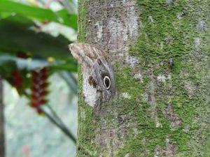 Un papillon bien caché