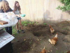 Alan et Carol ont des poules