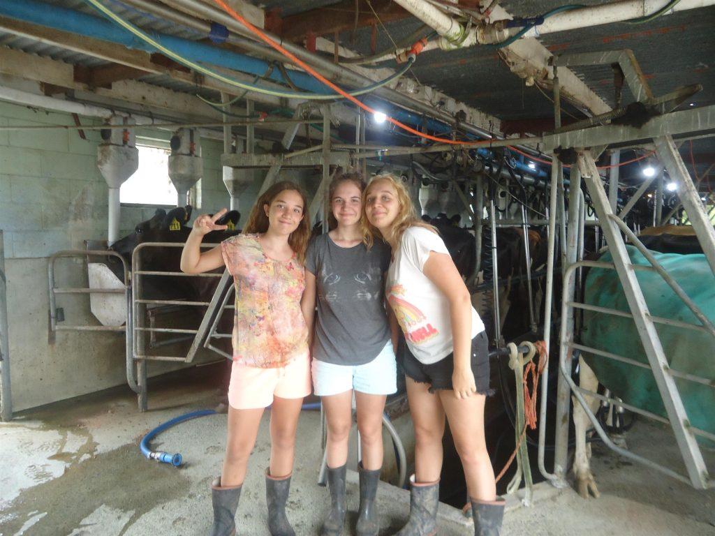 les trois soeurs dans le local de traite