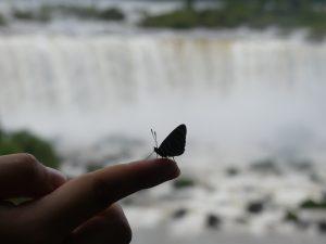 un papillon qui restera sur sa main presque 10 minutes !