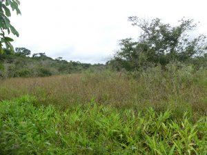 Iguazu côté Argentine : entrée du parc