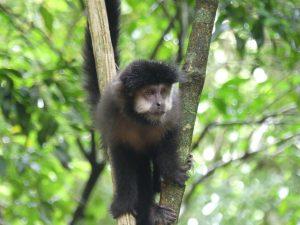 il y a des singes même quand il n'y a pas de touristes