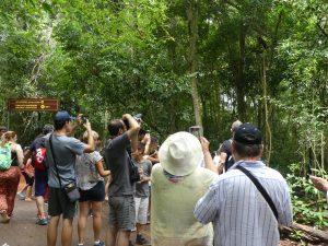 des touristes prennent en photo des singes...