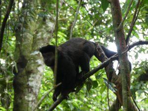 Iguazu côté Argentine : des singes