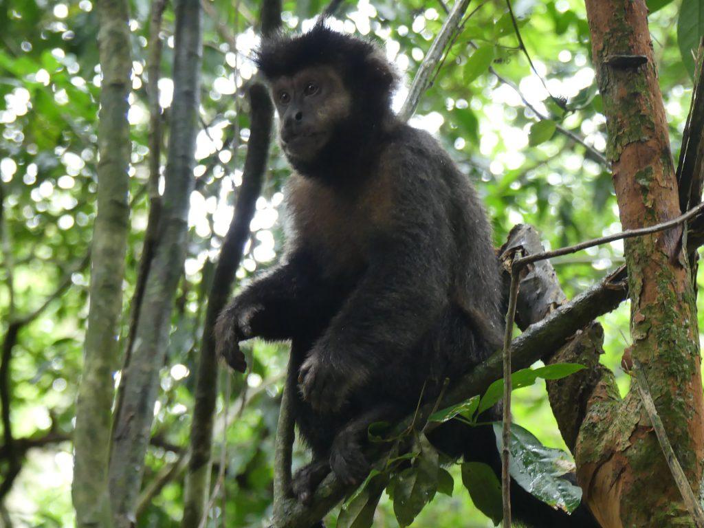 Un joli petit singe nous observe