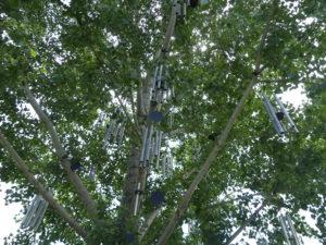 l'arbre à sons