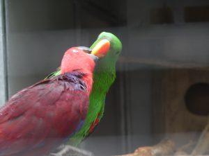 oiseaux et perroquets