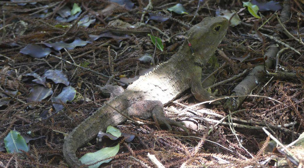 c'est un gecko