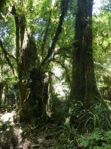 arbre à sorcières
