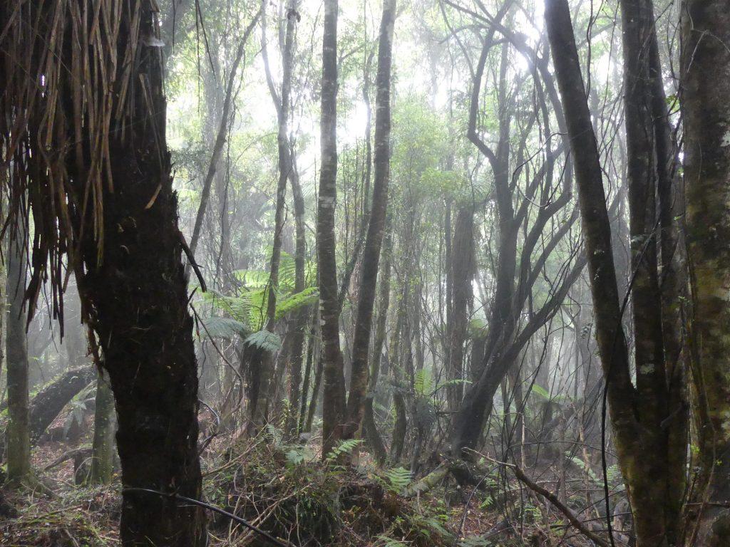 la brume traverse la zone et détrempe tout