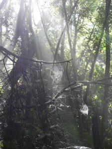 toiles d'araignées dans la forêt