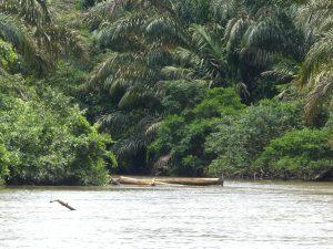 par endroits, de petits bras d'eau s'enfoncent dans la forêt dense