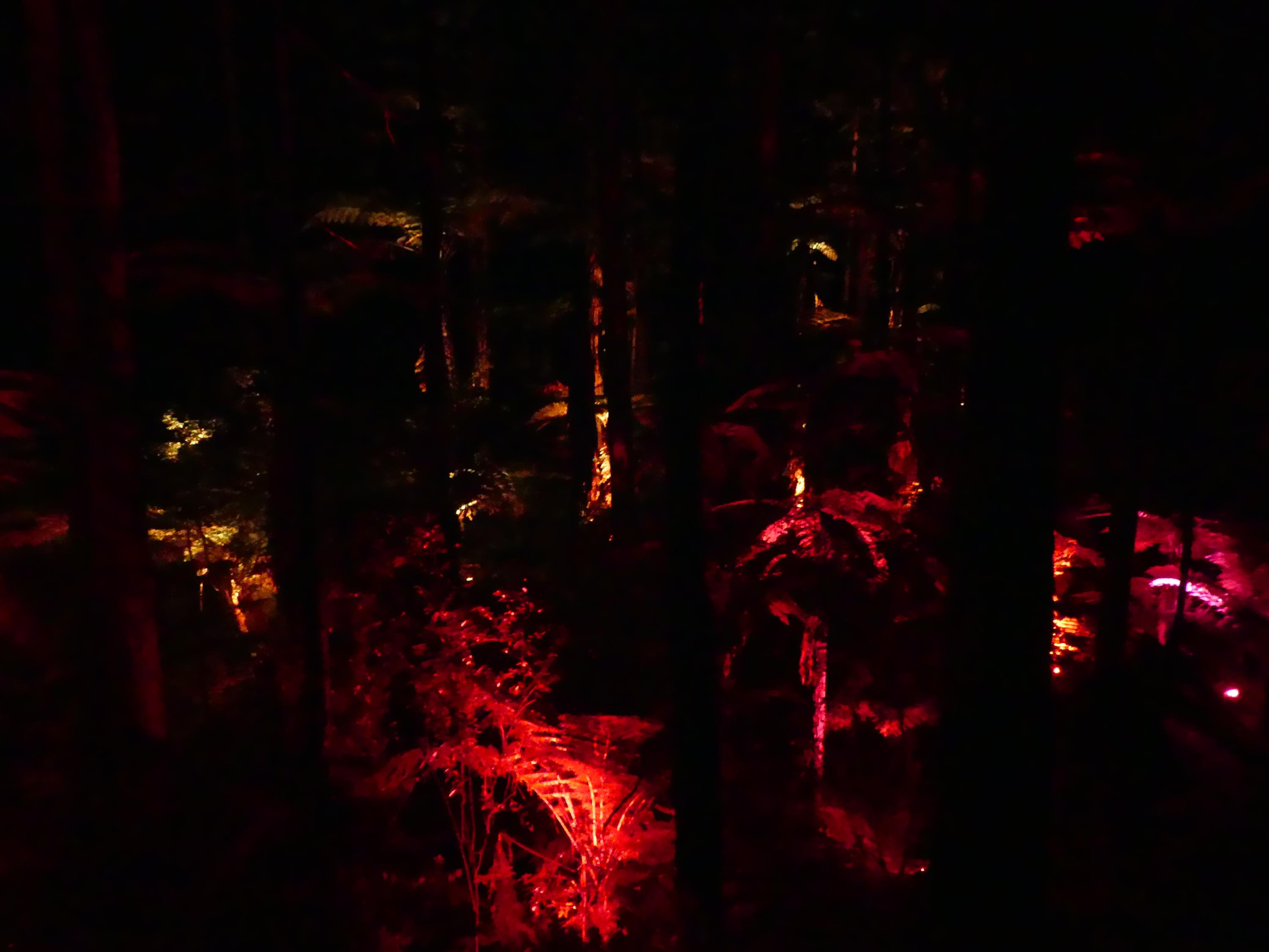 http://www.sans-avion.net/tdm/wp-content/uploads/Redwoods-Nightlights-33-Custom.jpg