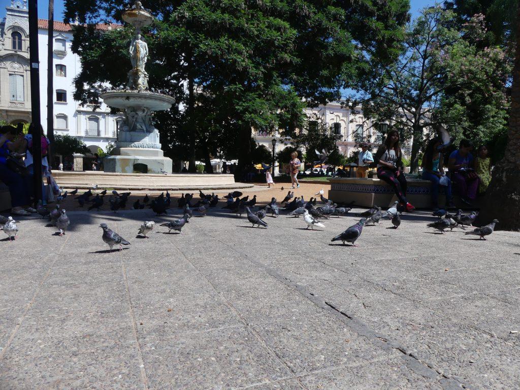 Fontaine et pigeons (des oiseaux pour une fois)
