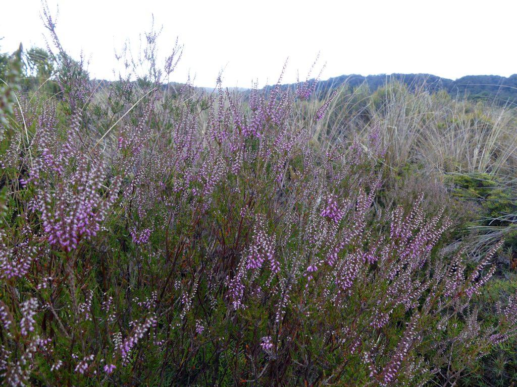 végétation locale qui pousse sur le champ de lave