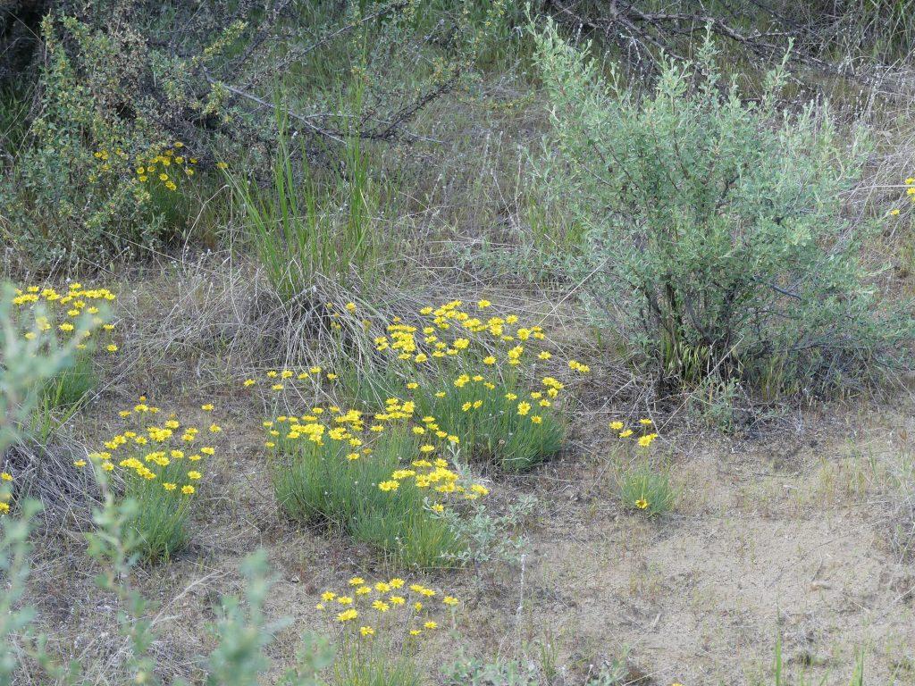 c'est le printemps, le désert est en fleurs