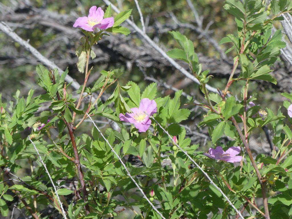 plusieurs plantes poussent dans ce désert et fleurissent cette semaine