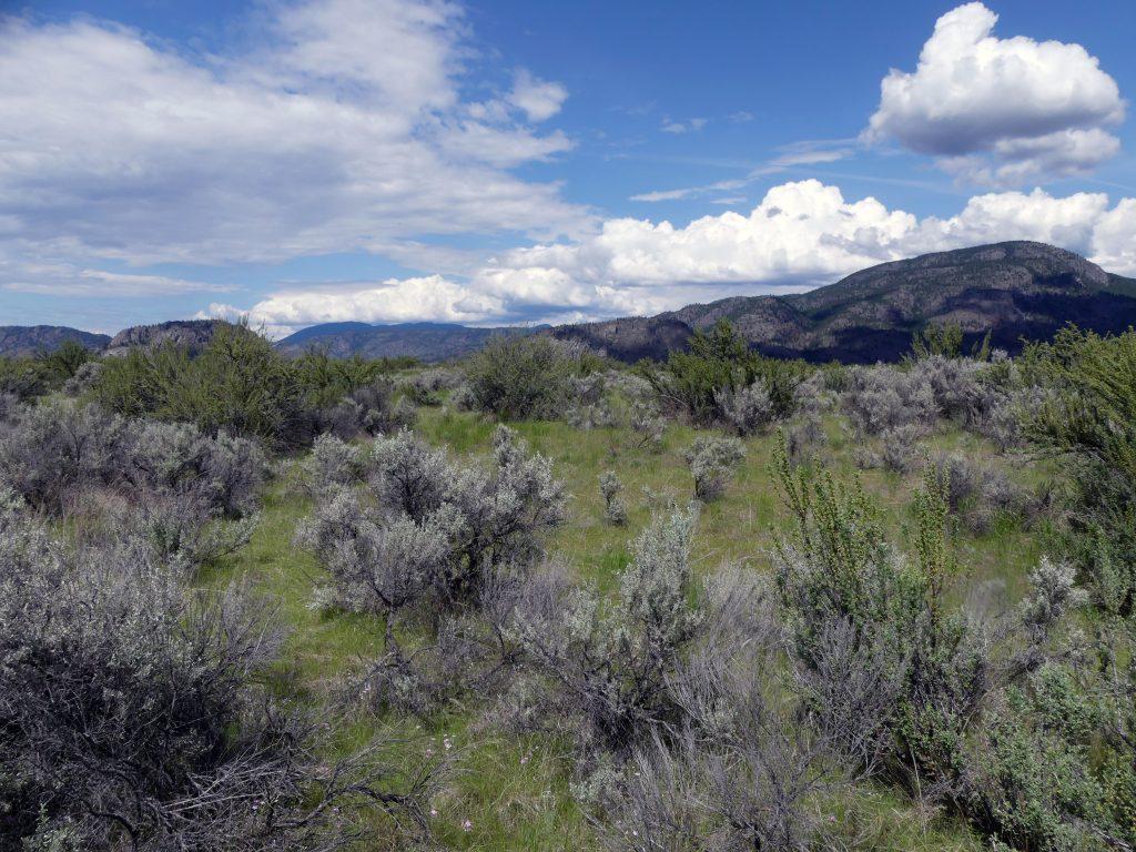 dès le mois de juin, tout ce qui est vert va sécher et devenir un ensemble de broussailles