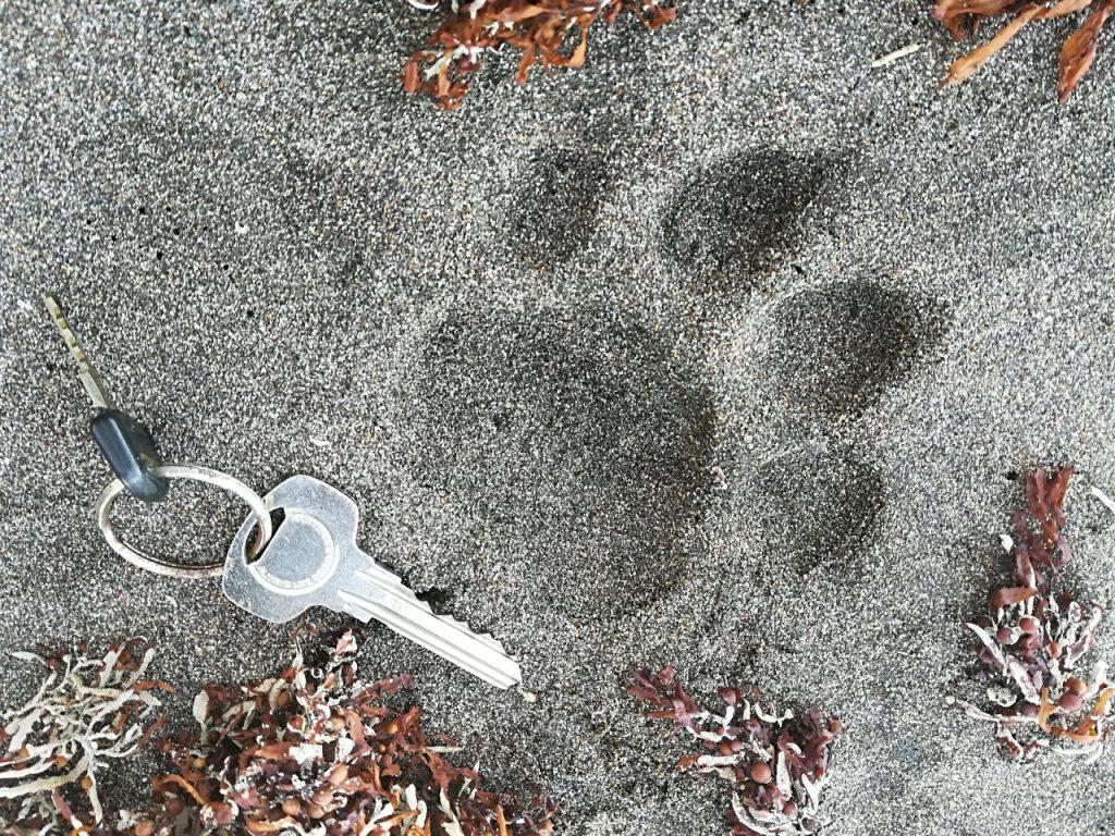 sur la plage au bord de la mer des Caraïbes : traces de pattes d'un jaguar