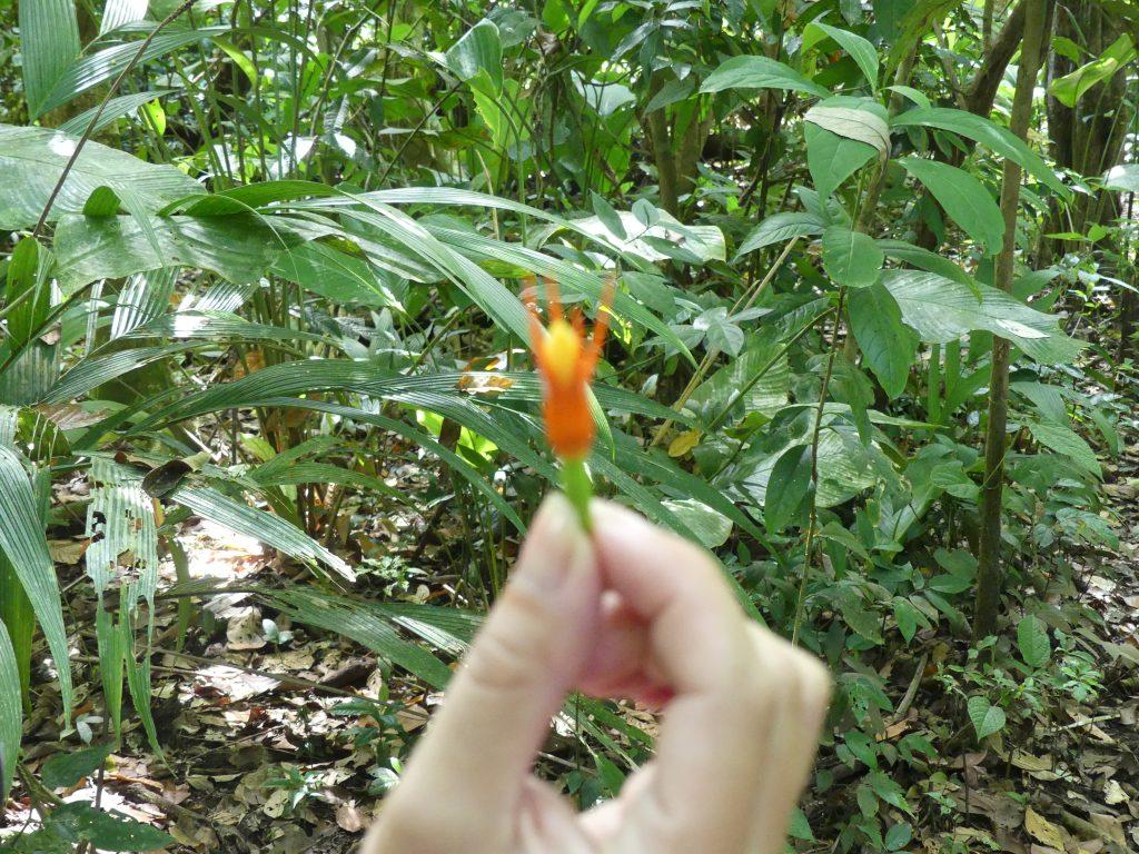 une petite fleur orange