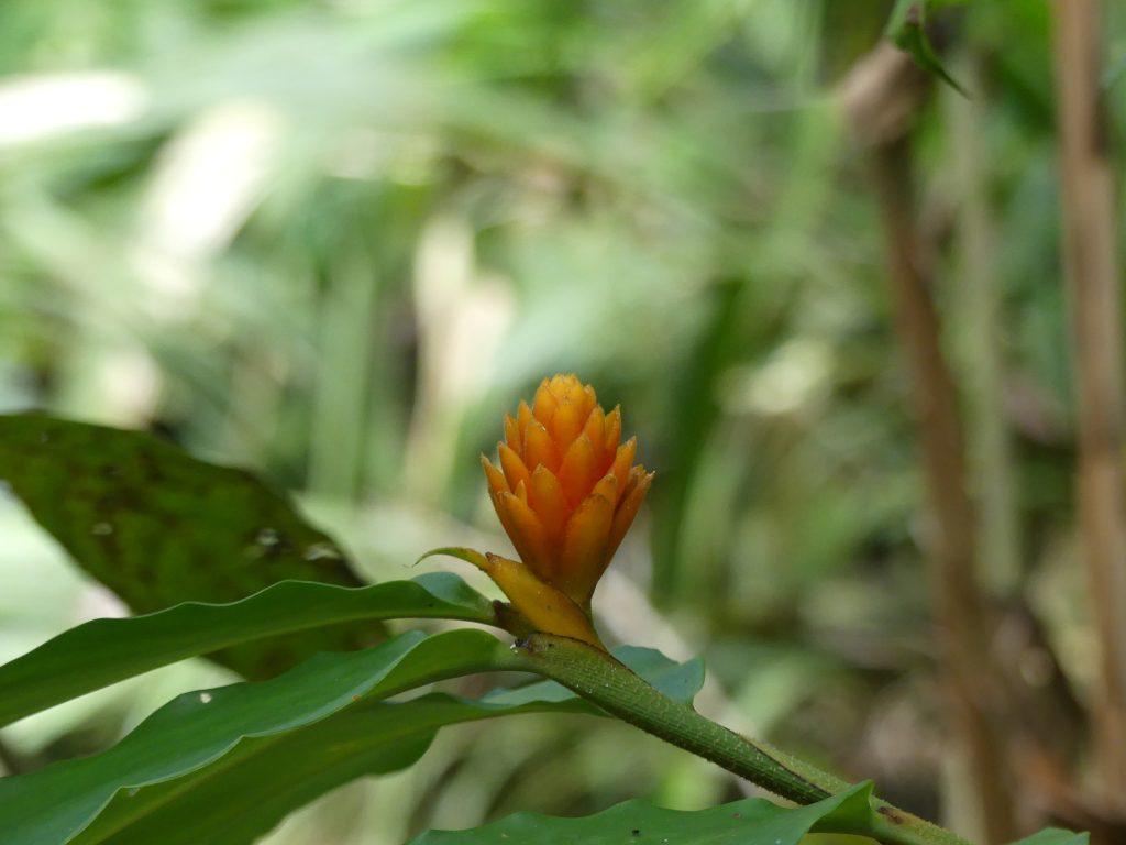 une autre fleur orange !