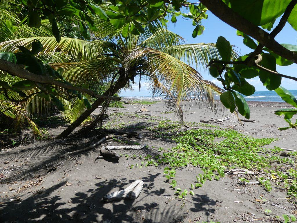 vue de la plage depuis la lisière de la forêt