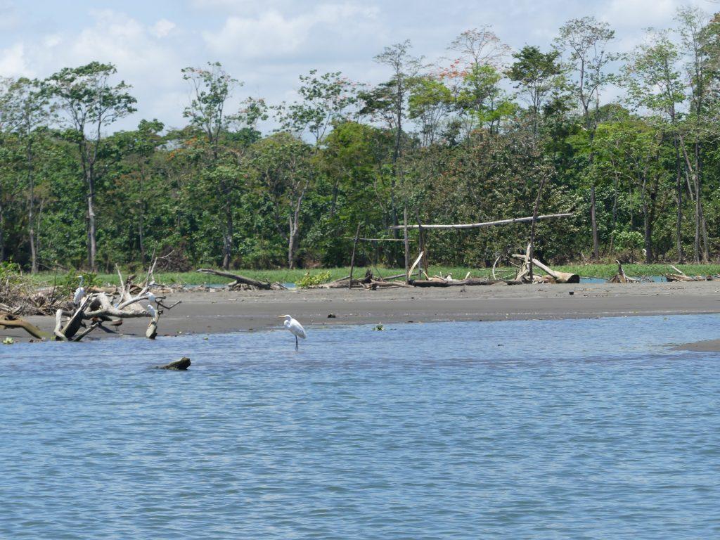 la forêt tropicale est très variée
