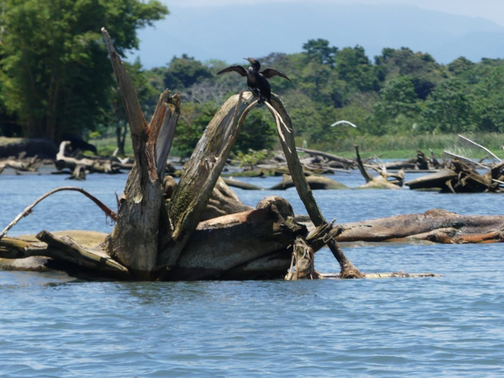 il y a de nombreux arbres morts au milieu de notre route (navigable)