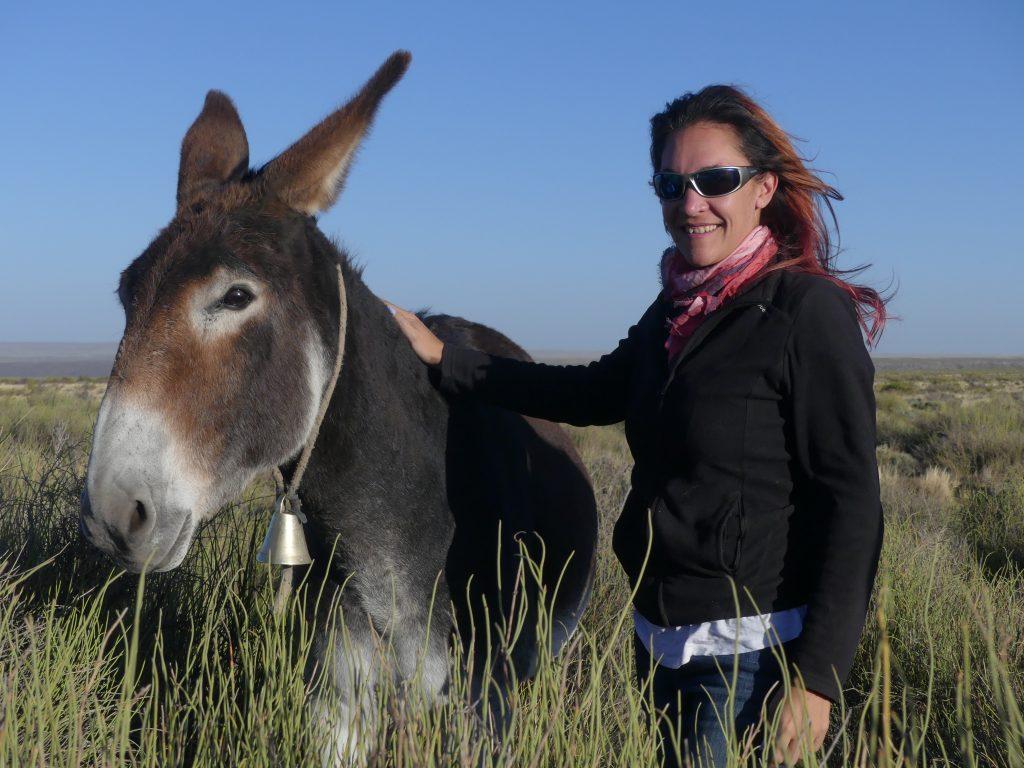 """la mule : ici, les contrebandiers envoient des mules chargées qui connaissent le chemin """"par coeur"""", et les récupèrent de l'autre côté de la frontière..."""
