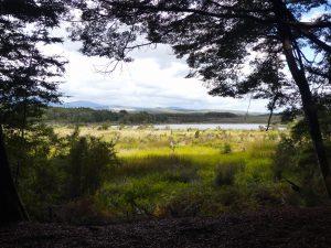 vue sur le lac depuis le sous-bois