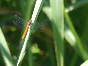 insectes en pagaille